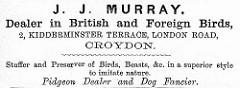"Advert for a ""Dealer in British and Foreign Birds"" at 2 Kidderminster Terrace."